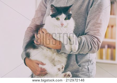 Woman holding a cat. Proper way to carry a cat.