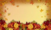 Photoshop composition of colorful fall flowers for Halloween or Thanksgiving frame or border with copy space. poster