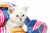 Cute baby kitten sitting with red white and blue Fourth of July decorations on white background poster