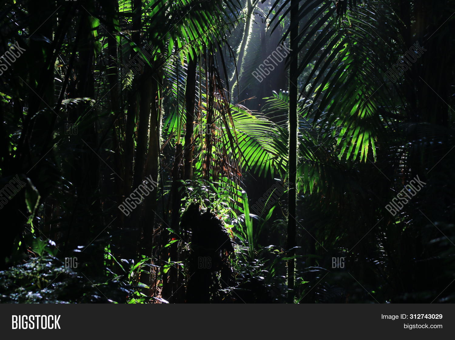 Wallpaper Tropical Image Photo Free Trial Bigstock