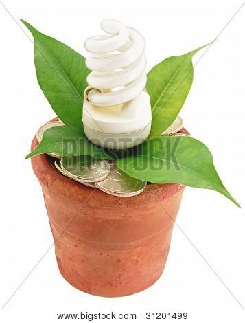 Fluorescent Lamp In Flowerpot With Money Coins And Green Leaf Economy Conceptual