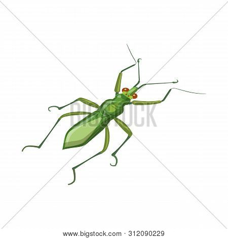 Vector Design Of Grasshopper And Beetle Icon. Set Of Grasshopper And Ant Stock Symbol For Web.