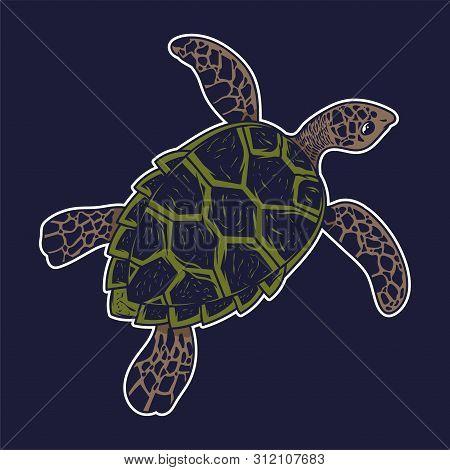 Big Sea Ocean Wild Animal Turtle Slow Swim Colorful Drawing Graphic Style Cartoon Character Vector I