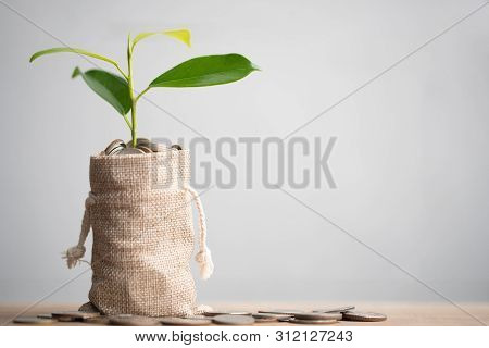 Coins in sack and plant glowing in savings coins, Pension fund, 401K, Passive income, Investment and retirement concept. savings and making money, Business investment growth concept. Risk management. poster