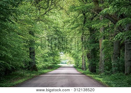 Trees Arching Over Road With Converging Lines At The Horizon Of A Long Path Through The Woods. Green