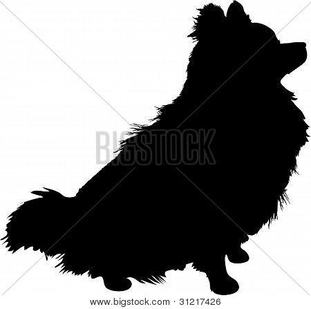 Pomeranian Silhouette
