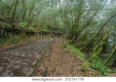 Super Wide Angle Panorama. Relict Forest On The Slopes Of The Garajonay National Park Mountains. Gia