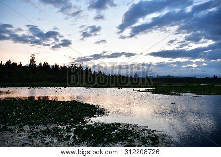A View Of Daybreak At Burnaby Lake. Bc Canada