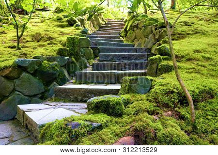 Pathway With Outdoor Steps Surrounded By Lush Gardens Taken In A Garden