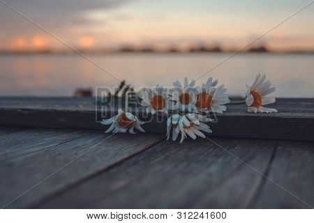 Daisy Flowers On A Wooden Jetty By The Lake In Sunset Light. Soft Focus Nature Background. Toned Ima
