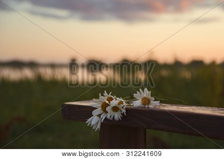 Daisy Flowers On A Wooden Bench By The Lake In Sunset Light. Soft Focus Nature Background. Toned Ima