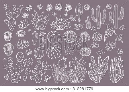 Cactus Succulent Collection. Cacti Sketchy Style Pastel Background. Hand Drawn Cactuses Vector Illus