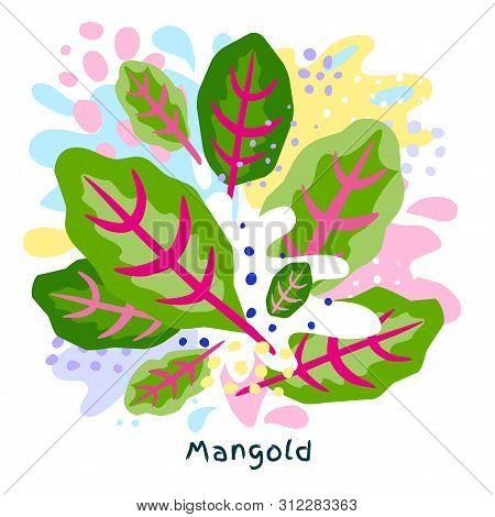 Fresh Mangold Green Spinach Vegetable Juice Splash Organic Salad Vegetables Condiment Spice Splatter