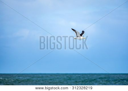 An image of a seagull flying over the ocean