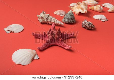 Starfish And Variety Of Seashells On The Background Of Living Coral. Flat Lay. Marine Concept