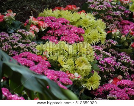 Profusion Of Assorted Colorful Flowers In A Landscaped Garden