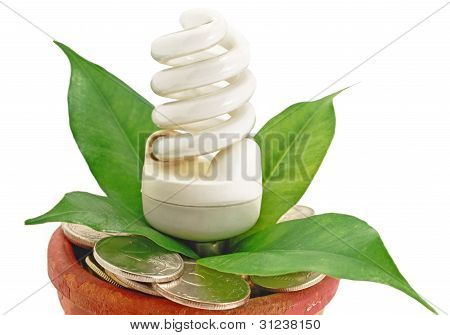 Lamp Fluorescent Eco In Pot With Money Coins