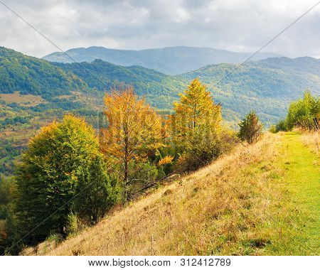 Sunny Weather After The Storm In Mountains. Beech Trees On The Slope Of A Hill In Colorful Foliage I