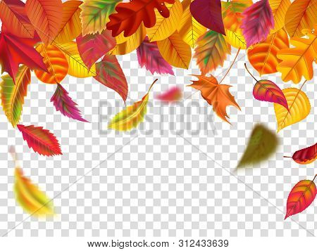 Autumn Leaves Fall. Falling Blurred Leaf, Autumnal Foliage Fall And Wind Rises Yellow Leaves. Leaf D