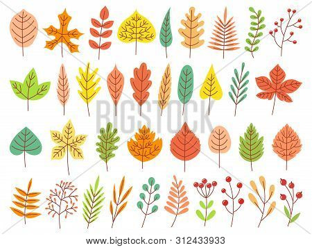 Autumn Leaves. Yellow Autumnal Garden Leaf, Red Fall Leaf And Fallen Dry Leaves. Botanical Forest Pl