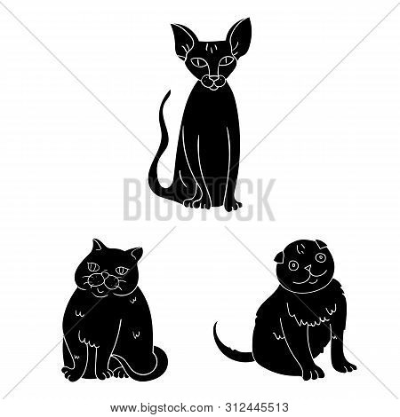 Bitmap Design Of Pet And Sphynx Sign. Set Of Pet And Fun Bitmap Icon For Stock.