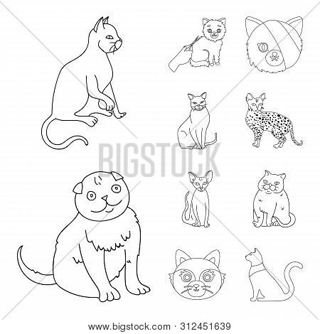 Isolated Object Of Pet And Sphynx Sign. Collection Of Pet And Fun Stock Bitmap Illustration.