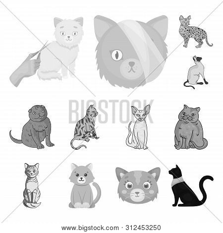 Bitmap Illustration Of Pet And Sphynx Logo. Set Of Pet And Fun Stock Symbol For Web.