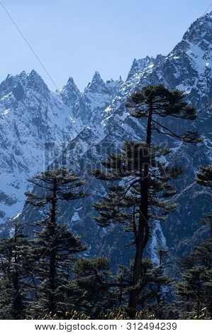 Mountains Peaks In North Sikkim, India. There Are Trees In Foreground.