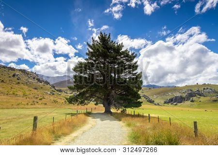 An image of a big tree landscape New Zealand south island