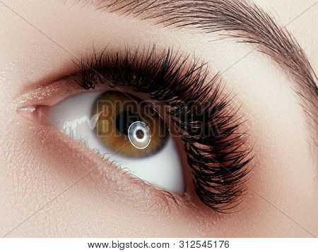 Eye Makeup . Closeup Macro Shot Of Fashion Eyes Visage. Close Up Of Woman Eye With Beautiful Brown W