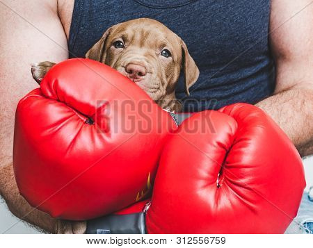 Young, Charming Puppy And Red Boxing Gloves