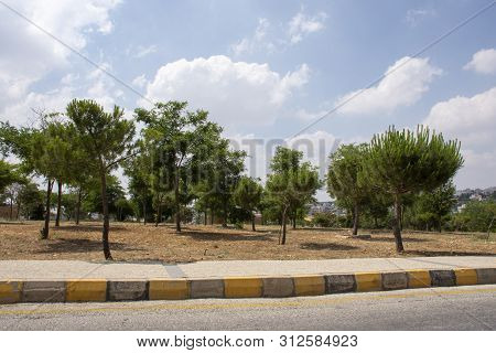 Wonderful Trees With Cloudy Sky In King Hussain Gardens In Amman In Jordan