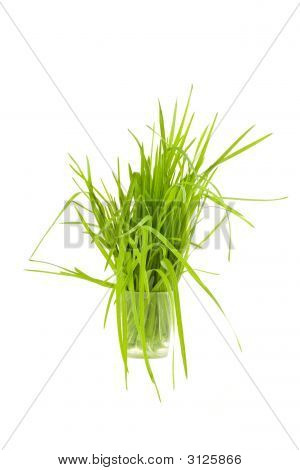 Green Grass In Cup Isolated On White Background
