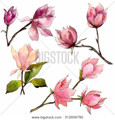 Pink Magnolia Floral Botanical Flowers. Watercolor Background Illustration Set. Isolated Magnolia Il