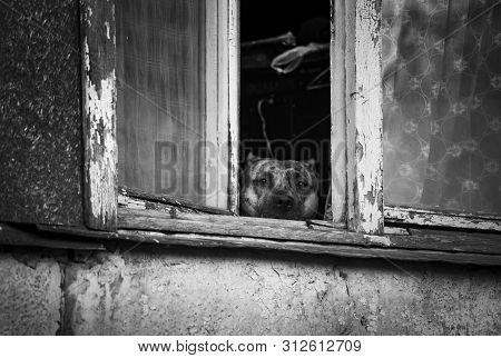 Sad Dog Looks Out Balcony Window To The Street Animal Pets Sadness Loneliness