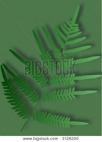 Abstract Fern Leaf