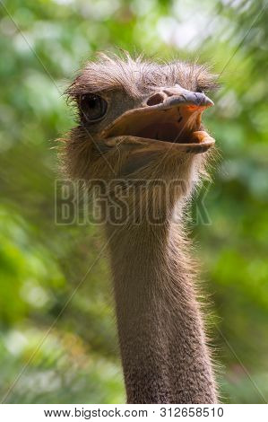 Long Necked Beauty: Ostrich Was Showing Off Its Feathery