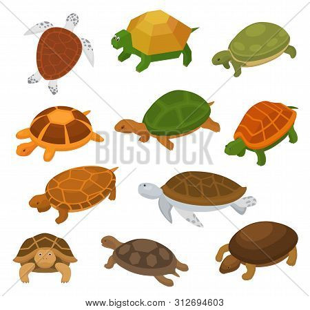 Turtle Vector Cartoon Seaturtle Character Swimming In Sea And Tortoise In Tortoise-shell Illustratio