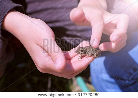 Boy Holds In Hands Catching Little Frog And Touches It Back, Hands Closeup. Boy Is Walking On The Ri