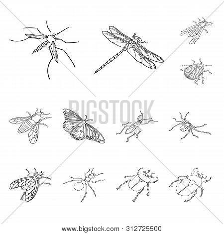 Vector Illustration Of Fauna And Entomology Logo. Set Of Fauna And Animal Stock Vector Illustration.