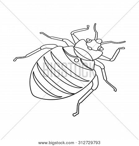 Isolated Object Of Beetle And Black Symbol. Collection Of Beetle And Arthropod Stock Symbol For Web.