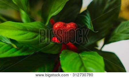 Red Heart In The Midst Of Colorful Green Leaves Closeup. Love, Valentine, March 8, Tropical Nature,