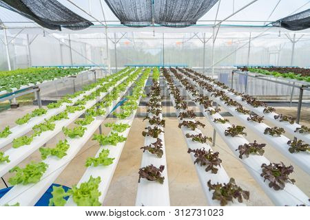 Growing Vegetables Without Using Soil Or Calling Another Type Hydroponic Vegetable Growing The Conce