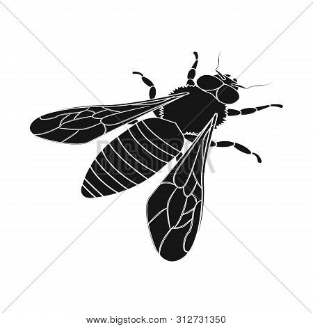 Vector Illustration Of Bumblebee And Wild Logo. Collection Of Bumblebee And Biology Vector Icon For