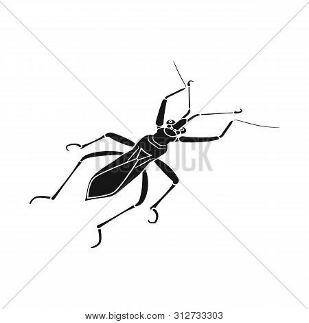 Isolated Object Of Grasshopper And Beetle Logo. Collection Of Grasshopper And Ant Stock Symbol For W