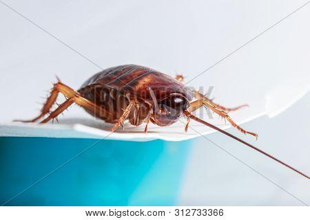 Cockroach Brown Walk On Foam Sheet White On  Background