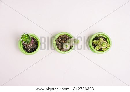 Cacti In Pots On A White Background. Three Plants With Prickles Stand In A Row In A Line. Different