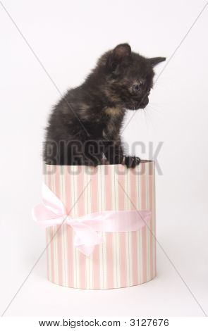 A black kitten sits insideo of a pink and white striped gift box. One in a series poster