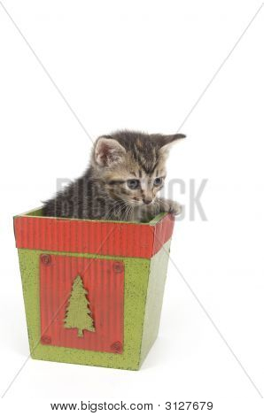 A kitten sits inside of a flower pot on white background poster