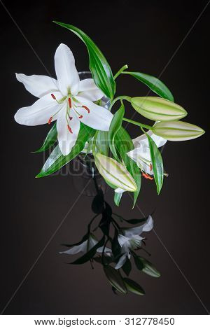 White Lily In Transparent Vase, Reflected On Black Glass Background - Vertical. Lilium Navona Is An